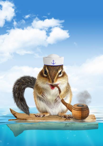 lustige mariner konzept, tierische streifenhörnchen schweben - matrosin kostüm stock-fotos und bilder