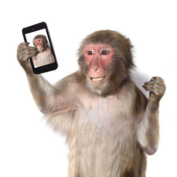 scimmia prendendo una selfie divertente e sorride alla macchina fotografica - macaco foto e immagini stock