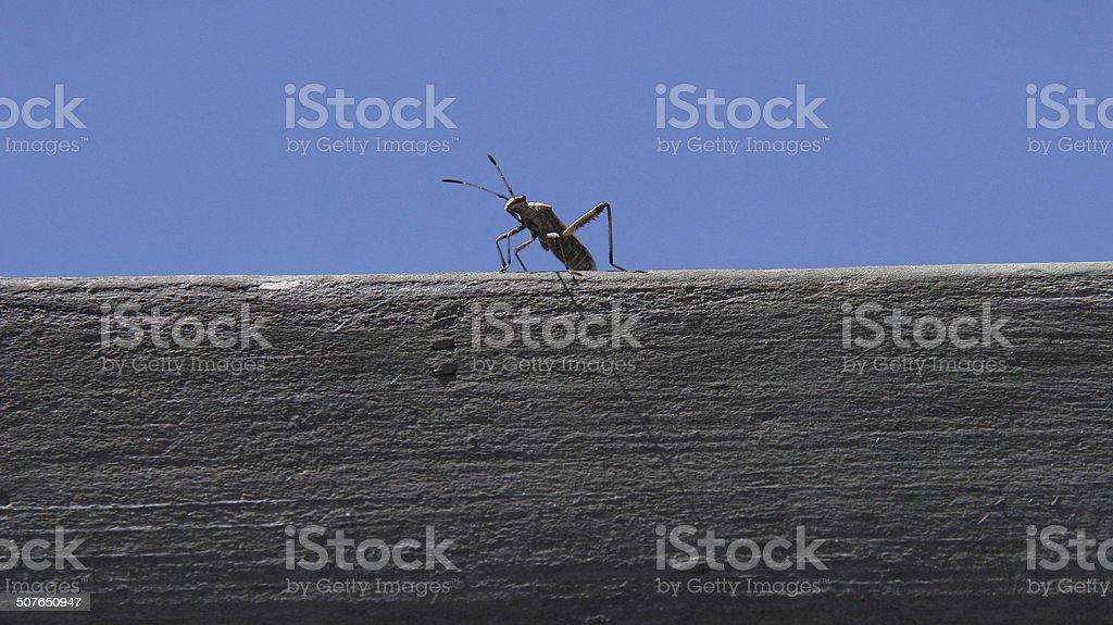 Funny Monster Grasshopper stock photo