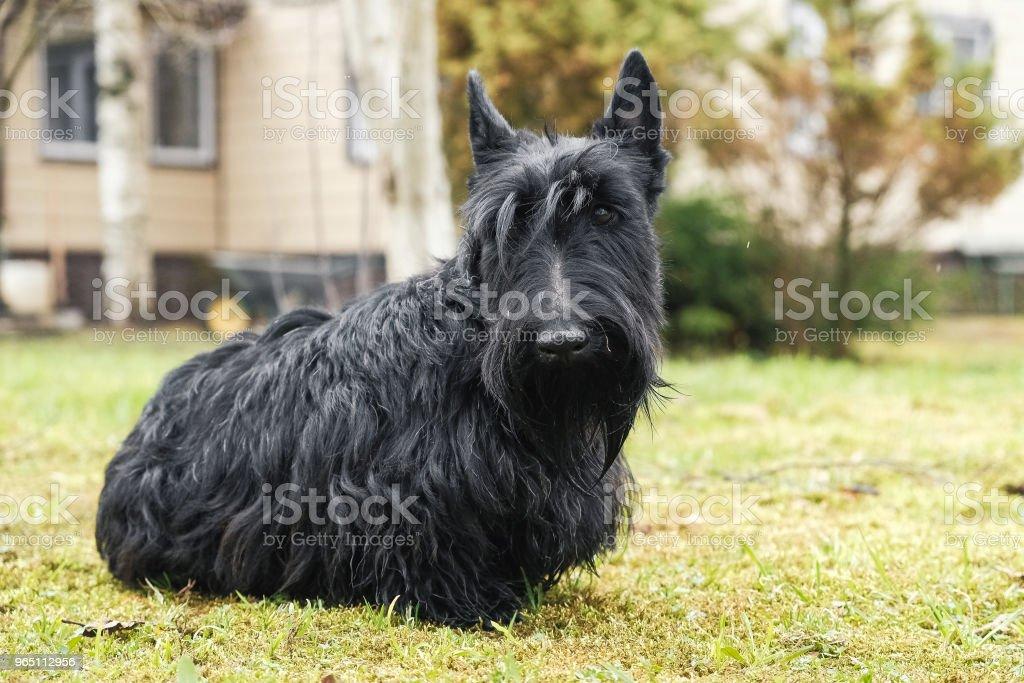 funny naughty dog zbiór zdjęć royalty-free