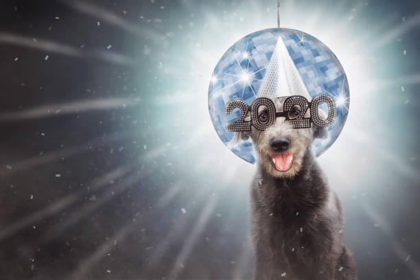 Funny New Year 2020 Dog stock photo
