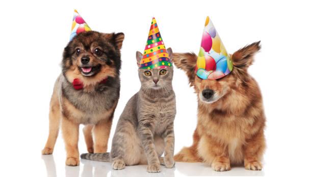 Funny party dogs and a cat wearing birthday caps picture id1048110410?b=1&k=6&m=1048110410&s=612x612&w=0&h=lyge0duxgalgdteje4fcx5m2xu kkakftaeajyvxdam=