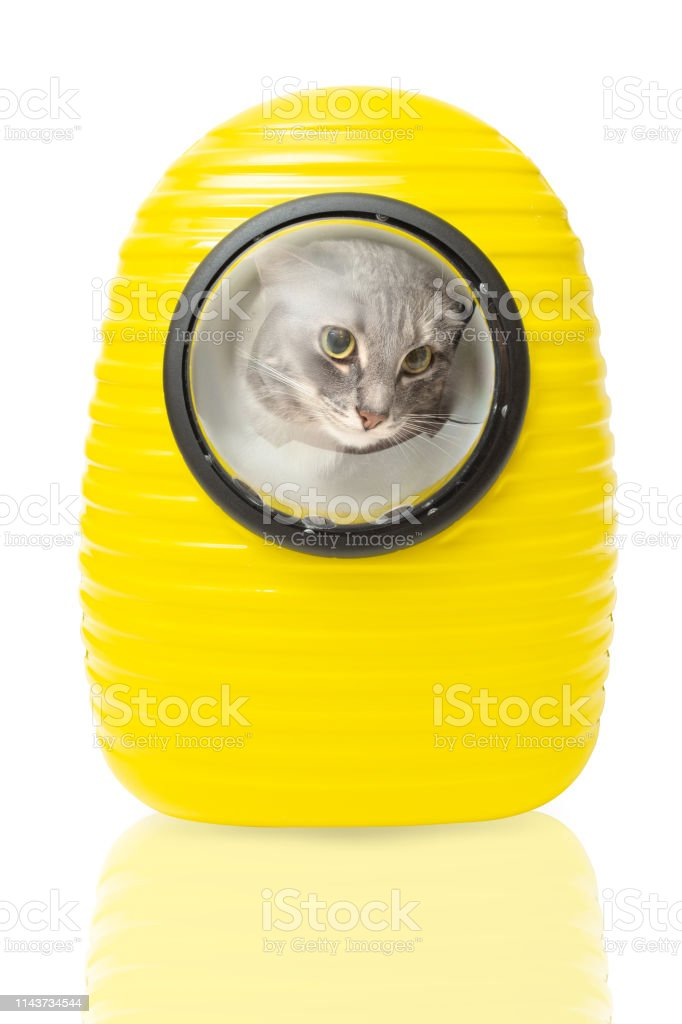 Funny pet carrying backpack isolated on white. The cat in the window looks at the world like an astronaut in a spacesuit in outer space stock photo