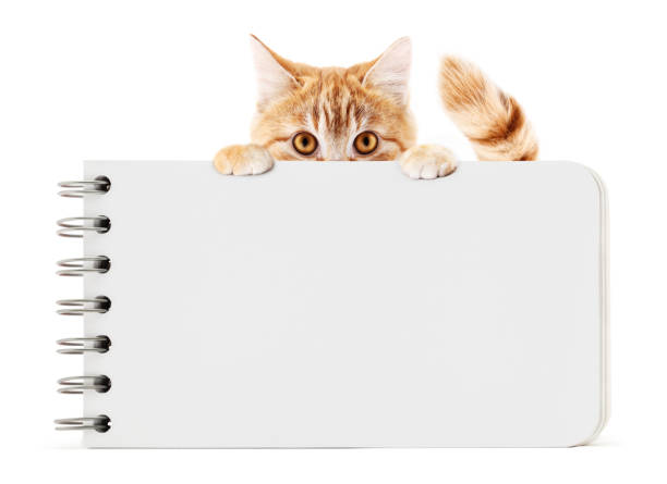 Funny pet cat showing a block notes isolated on white background picture id1085015002?b=1&k=6&m=1085015002&s=612x612&w=0&h=dkg6sggcdongu4l65ec95bsw6vaiwuy864iblxywjke=