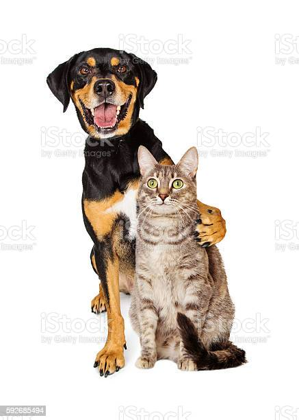 Funny photo of dog with arm around cat picture id592685494?b=1&k=6&m=592685494&s=612x612&h=gqnryrn5vpztkufarq4lph5nlusyp4r3ucbfqddcoke=