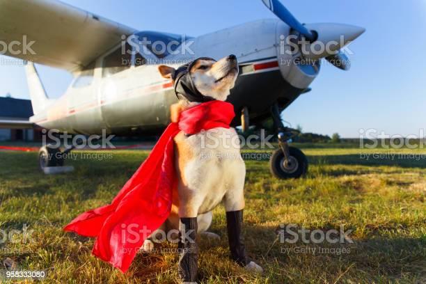 Funny photo of the akita inu dog picture id958333080?b=1&k=6&m=958333080&s=612x612&h=2itjnjil6ennvc84z mxcq7f5w4e pcd77kvbfyr1e0=
