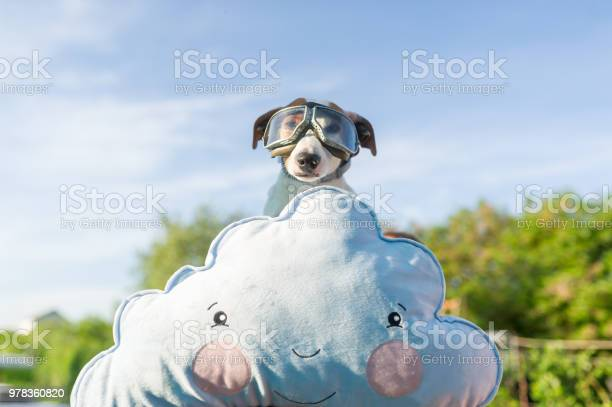 Funny photo of the jackrussell dog in a pilots glasses picture id978360820?b=1&k=6&m=978360820&s=612x612&h=0krnt2c29mmgbm9ye9szse rtjbjp9b6i3rgth2ehz0=
