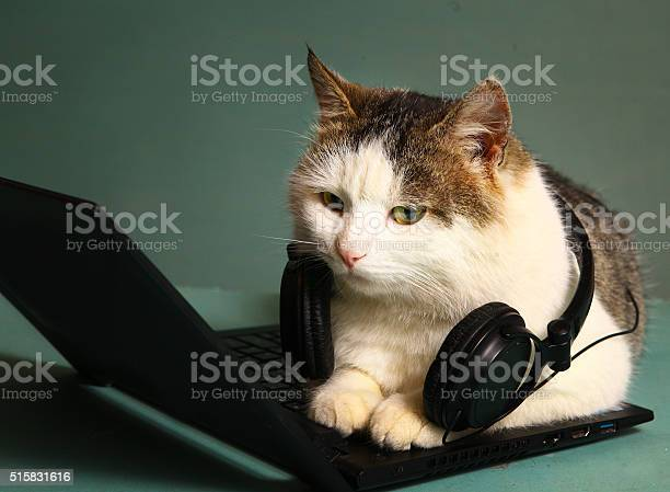 Funny picture of cat lay on copmuter laptop picture id515831616?b=1&k=6&m=515831616&s=612x612&h=k8zhsaa4tst tb1scpatbdfxsp8vgv6m1rbspjodhz8=