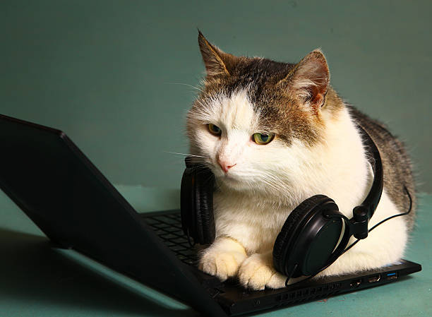 Funny picture of cat lay on copmuter laptop picture id515831616?b=1&k=6&m=515831616&s=612x612&w=0&h=ecri3jk4xslxoxlaieazw1yqjrojm fkx3jtihij to=