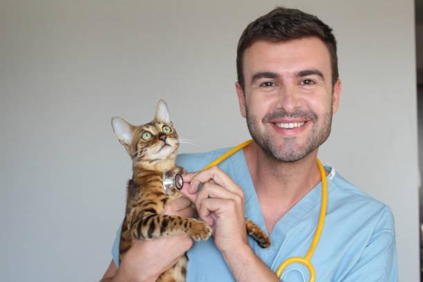 Funny picture of vet and bengal cat picture id986754870?b=1&k=6&m=986754870&s=612x612&w=0&h=hmpnpu7zbvv7ko9pfichdjh3veh5mcplrxihima8sro=