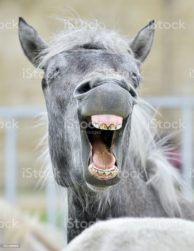 Funny portrait of a laughing horse stock photo
