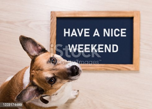 Funny portrait of cute dog with letter board inscription have a nice weekend word lying on floor