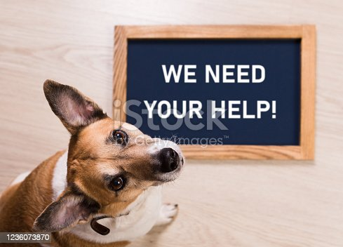 Funny portrait of cute dog with letter board inscription WE NEED YOUR HELP lying on floor.