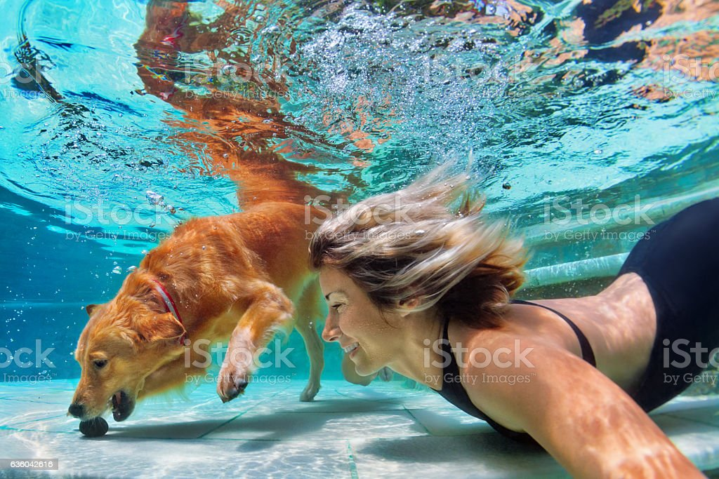 Funny portrait of smiley woman with dog in swimming pool stock photo