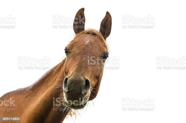 Funny portrait of warmblood horse picture id505414604?b=1&k=6&m=505414604&s=612x612&h=g pjhwp smxnpud 8fzhlbhggenqlbgwho9pl3l9vsk=