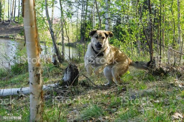 Funny puppy golden retriever picture id1011478158?b=1&k=6&m=1011478158&s=612x612&h=ootwzyf k8ayj2jawzgimnmxl2wvxsscj5ao4a1lury=