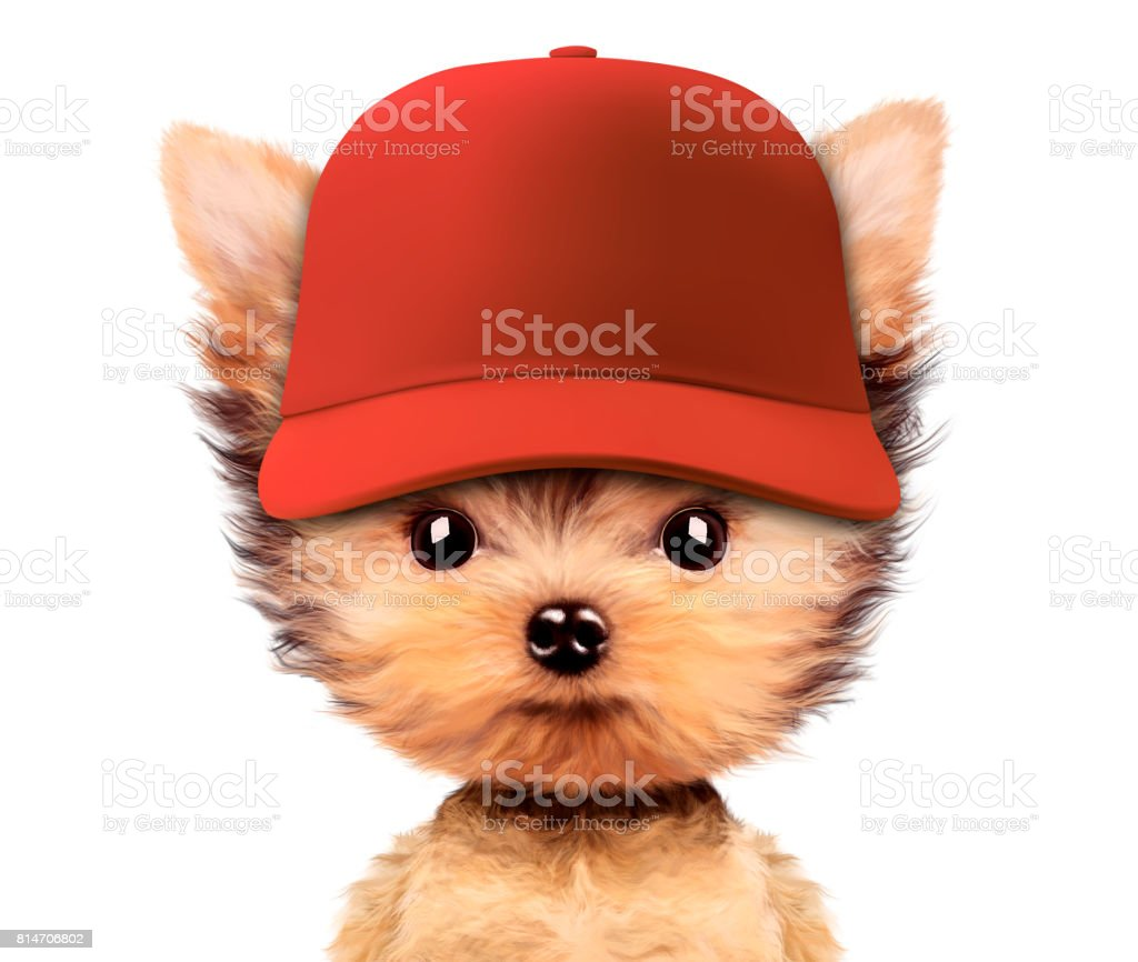 Funny puppy in baseball hat isolated on white stock photo