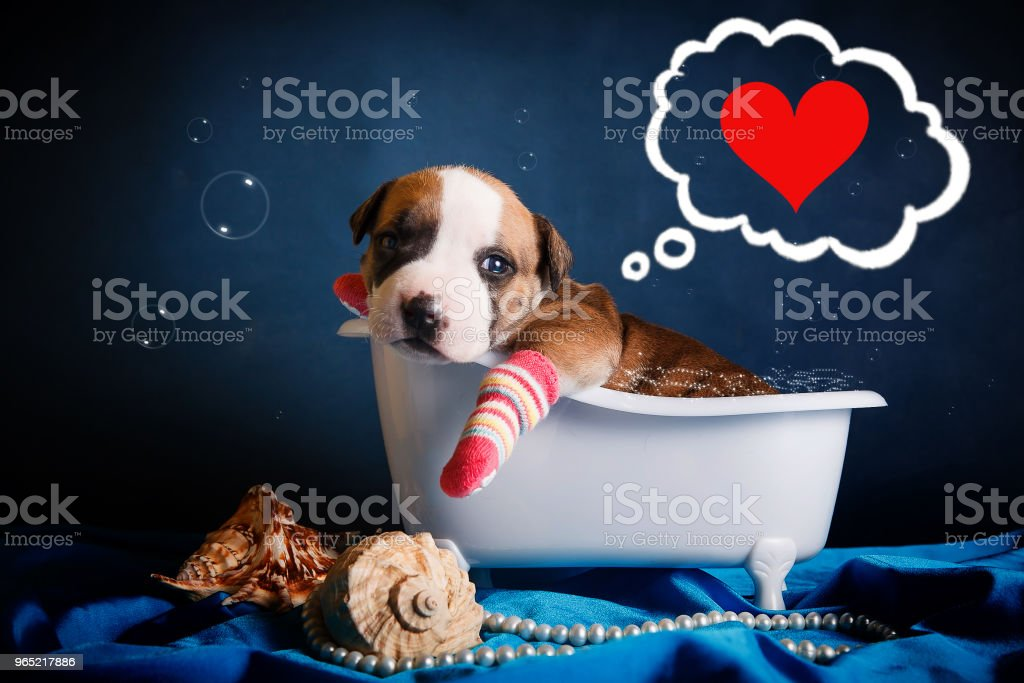 funny puppy lies in the bath and thinks about love royalty-free stock photo