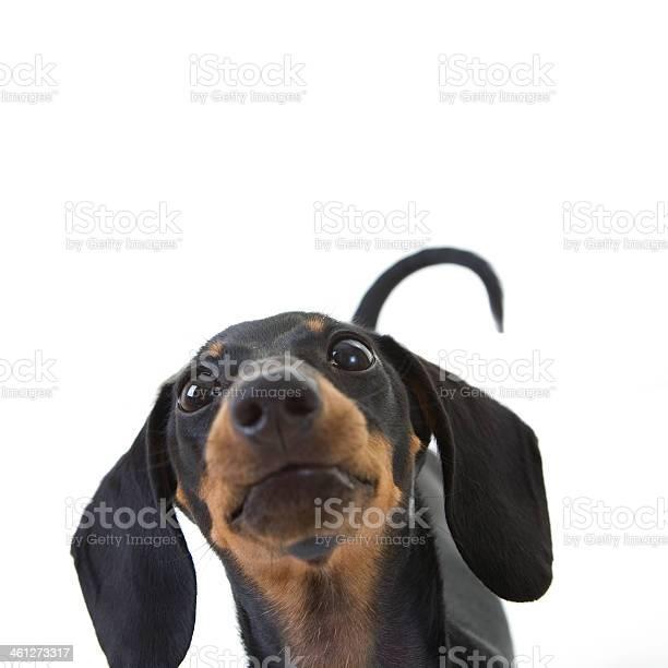 Funny puppy picture id461273317?b=1&k=6&m=461273317&s=612x612&h=vpxjxsi9l9 vsximfsniel8dbhxd8irm0otaz ri9yo=