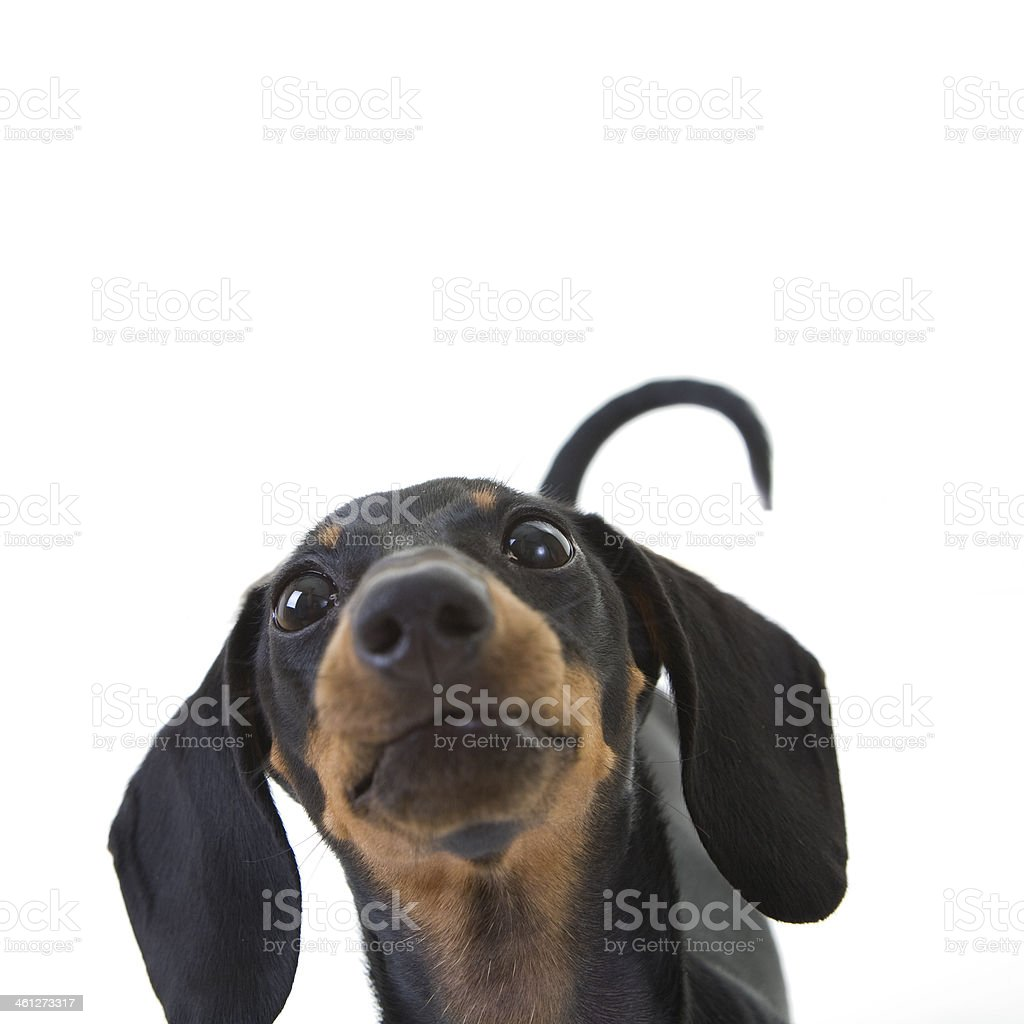 Funny puppy stock photo