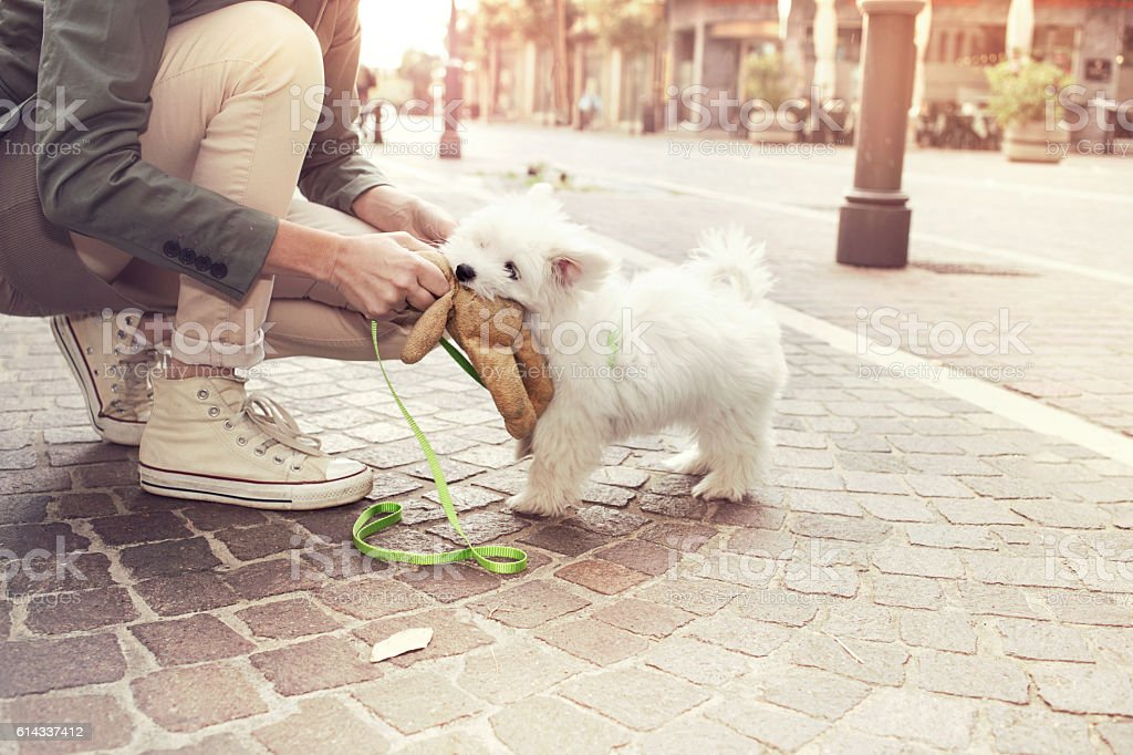 funny puppy plays with his owner in urban place stock photo