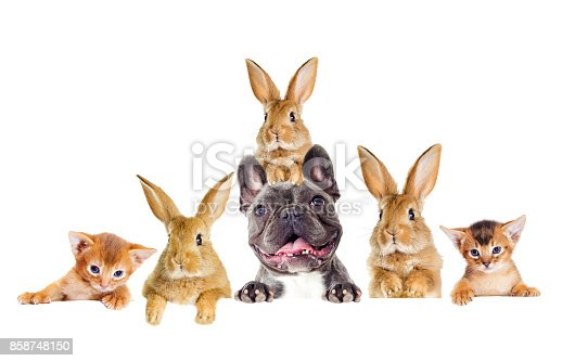 istock Funny rabbit and dog and kitten peeking 858748150