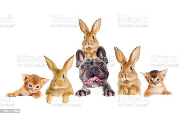 Funny rabbit and dog and kitten peeking picture id858748150?b=1&k=6&m=858748150&s=612x612&h=toa63x9xupynjzv twgaht jyd1qvggpcovab9g rmw=