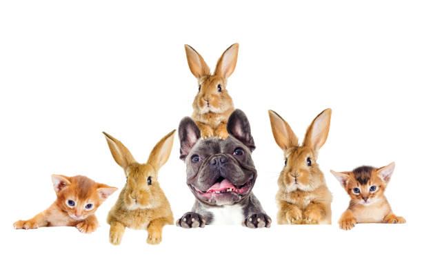 Lustiges Kaninchen und Hund und Kätzchen spähen – Foto