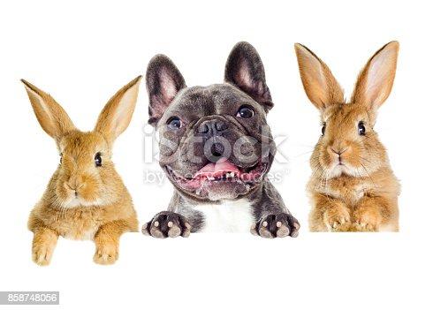istock Funny rabbit and dog peeking 858748056