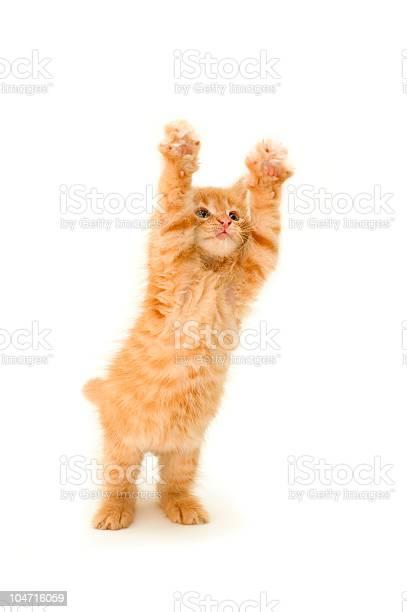 Funny red kitten picture id104716059?b=1&k=6&m=104716059&s=612x612&h=oa9rv5o0crmbclytpcsvgg08fgst03rnpzgr4nooqp0=
