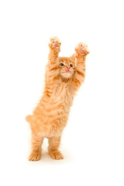 Funny red kitten picture id104716059?b=1&k=6&m=104716059&s=612x612&w=0&h=yejqu1dyur1keu2ud6kpwco44hmsz0ozgvaql4p wto=