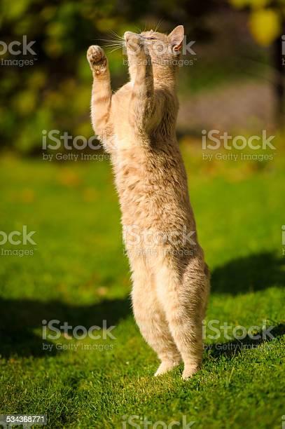 Funny redhaired cat picture id534368771?b=1&k=6&m=534368771&s=612x612&h=adluipr ijrqpskvlpxvpvfkg07qv0s01qiap7hxbyy=