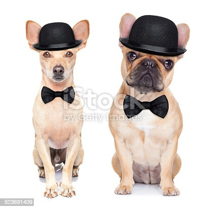 comedian classic couple of dogs ,wearing a bowler hat ,black tie and mustache, isolated on white background