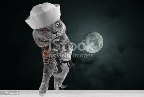 Funny beautiful navy cat