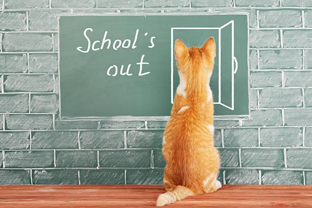 Lustiger Schulferien-Konzept mit Wissenschaftler katze – Foto