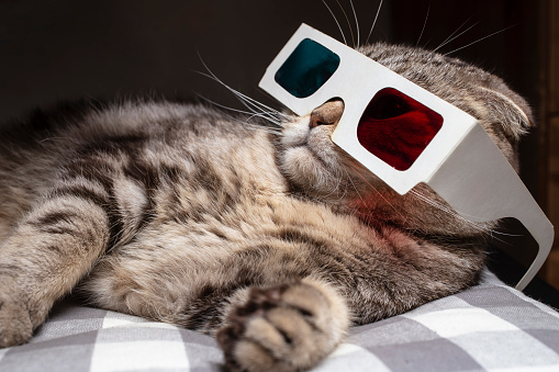 istock Funny scottish fold cat wore 3D glasses and watching a movie on the television set 1130354452