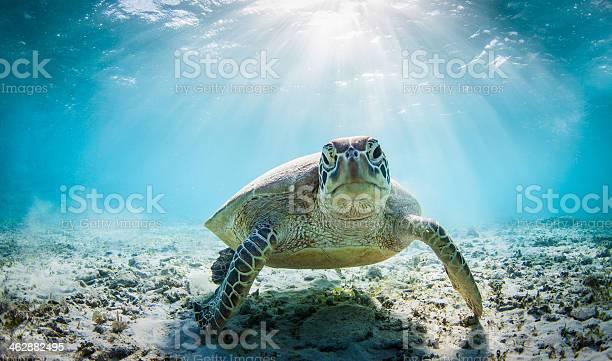 Funny sea turtle picture id462882495?b=1&k=6&m=462882495&s=612x612&h=8ynvmbpeerbb0gheg6fwb7h7evwz1a9woguodb mxnm=