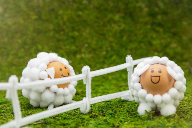lustige schafe figuren eiern mit einem zaun auf grünem hintergrund moosig, ostern oder frühjahr thema - schafkopfkarten stock-fotos und bilder