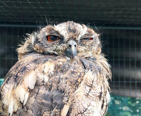 istock Funny sleepy owl with one eye open 610117312
