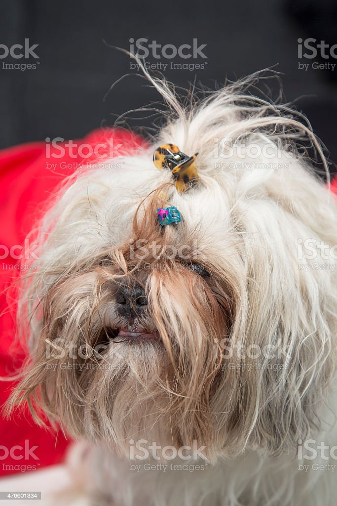 Funny Smiling Hairy Cute Dog Portrait Stock Photo Download Image Now Istock