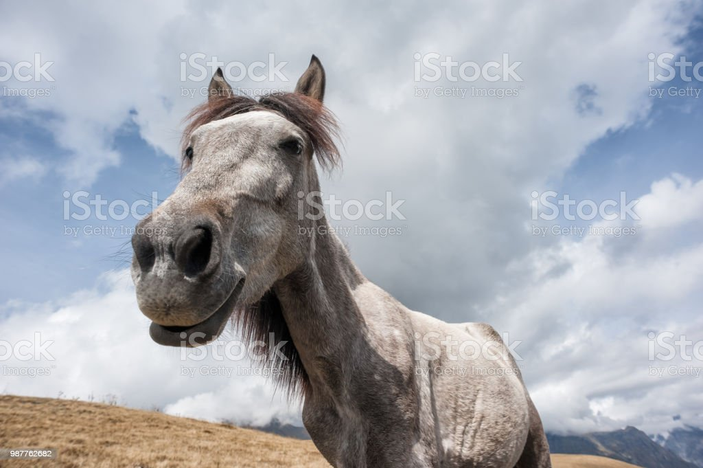Funny Smiling Horse Stock Photo Download Image Now Istock