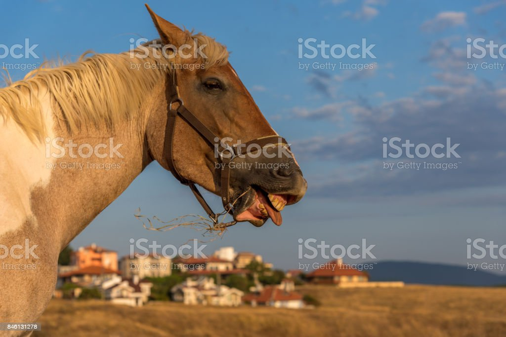 Funny Smiling Horse Portrait Stock Photo Download Image Now Istock