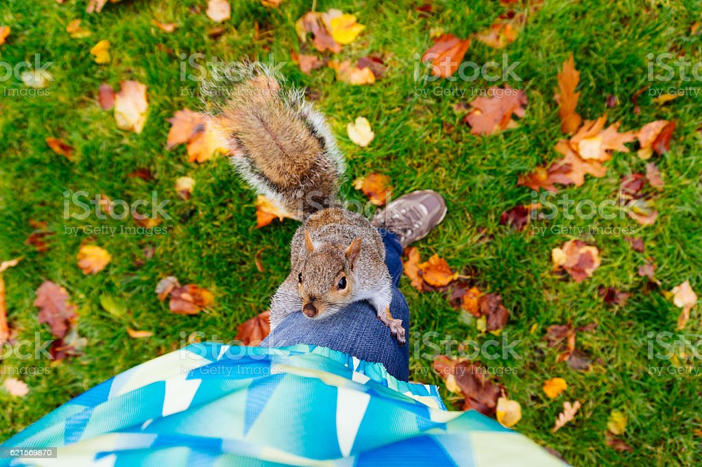 Funny squirrel climbing a leg foto stock royalty-free