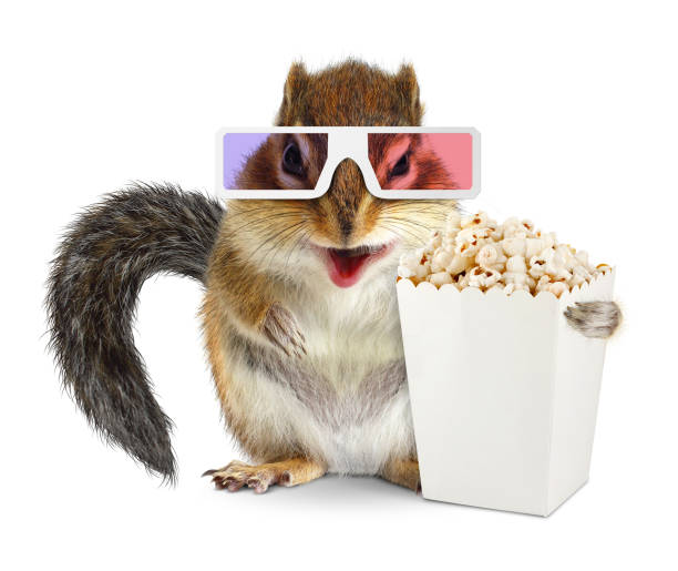 Funny squirrel with blank popcorn bucket and 3d glasses on white stock photo