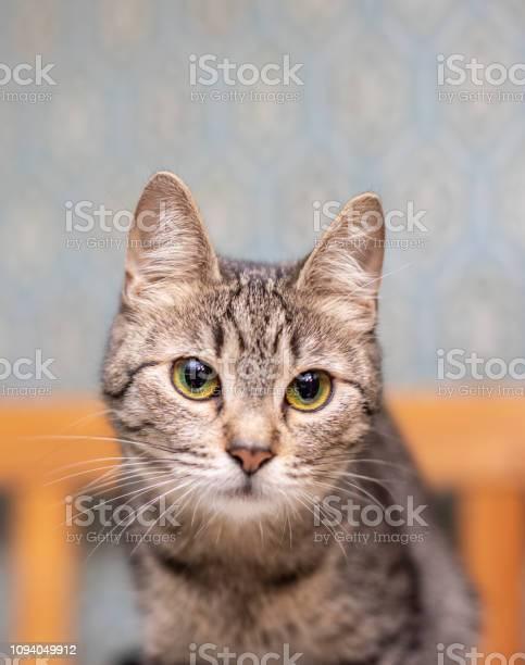 Funny striped cat at home picture id1094049912?b=1&k=6&m=1094049912&s=612x612&h=lohwu5lrkuiwaf1x22mqrmpgyqhwcv9k2icgu iszaa=