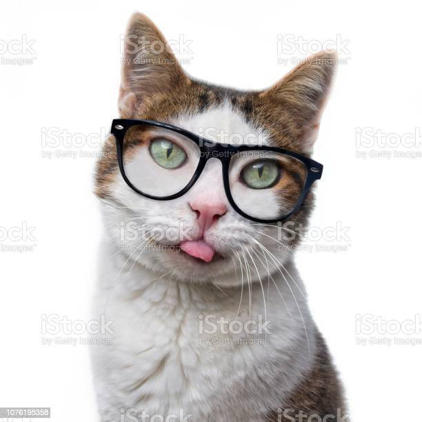 Funny tabby cat in nerd glasses put out his tongue isolated on white picture id1076195358?b=1&k=6&m=1076195358&s=612x612&h=f29aiujj37h0o7mduw6p9a6ln0ajzdrc3d9hbj kfjk=