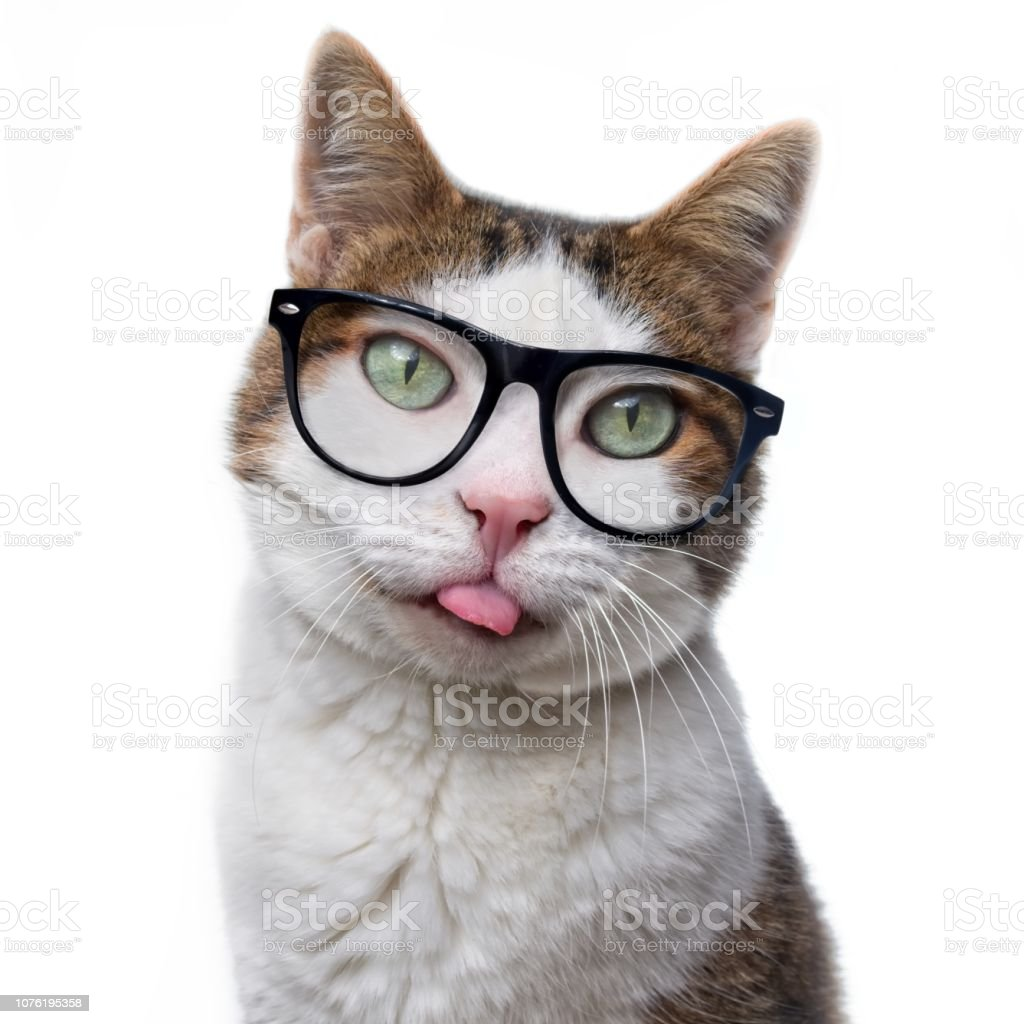 Gato gracioso en gafas nerd sacó su lengua. Aislado sobre fondo blanco. - foto de stock