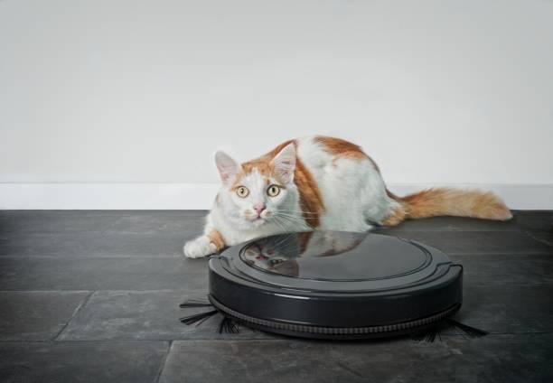 Funny tabby cat looking curious behind a robot vacuum cleaner picture id1127163483?b=1&k=6&m=1127163483&s=612x612&w=0&h=qpacnzppzpuj9g1rfh7yfrslwxi1we3jq5rrnizutqk=