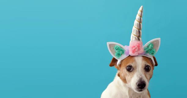 Funny unicorn little white dog on blue background stock photo