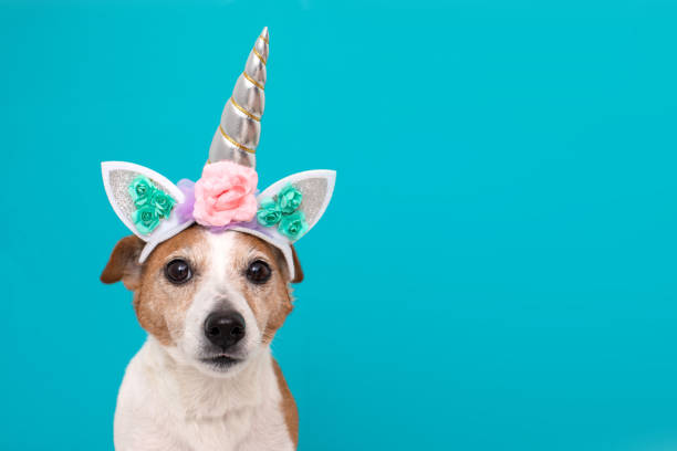 Funny unicorn little white dog on blue background Funny unicorn little white dog looking at camera on blue background with copy space protruding stock pictures, royalty-free photos & images